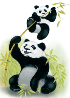 Circulaire Panda Chaussures En Ligne